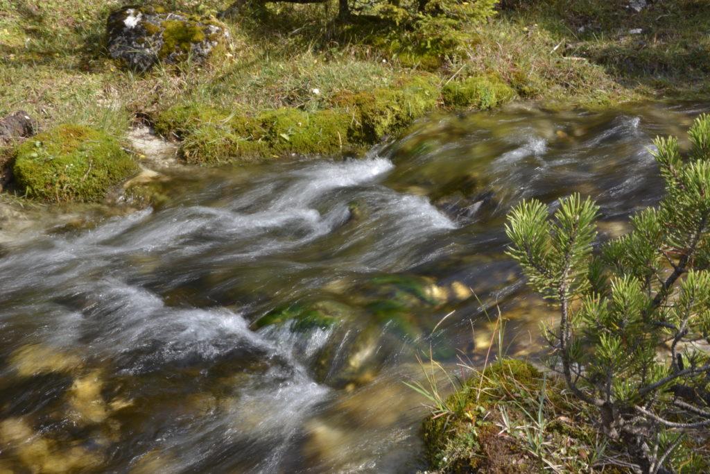 Klares Wasser fließt über die Felsen durch Moos und Bergwiese